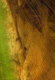 Kokosowego drzewa zbliżenia tekstury tło Zdjęcie Royalty Free