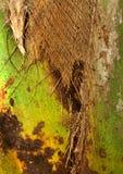 Kokosowego drzewa zbliżenia tekstury włosiany tło Zdjęcia Royalty Free