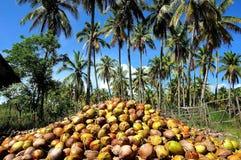 Kokosowego oleju fabryka Zdjęcia Stock