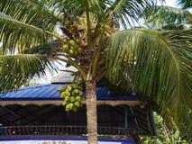 kokosowego projekta grunge stary palmowy pocztówkowy retro styl Obraz Stock