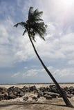 kokosowego projekta grunge stary palmowy pocztówkowy retro styl Zdjęcie Stock