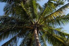 kokosowego projekta grunge stary palmowy pocztówkowy retro styl Zdjęcie Royalty Free