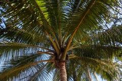 kokosowego projekta grunge stary palmowy pocztówkowy retro styl Obraz Royalty Free