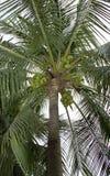 kokosowego projekta grunge stary palmowy pocztówkowy retro styl zdjęcia stock