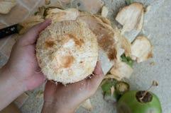 Kokosowej napój łzy owoc inside łupy w oddaleniu pojęcie Zdjęcia Royalty Free