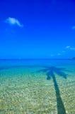 kokosowej palmy morze Zdjęcie Royalty Free
