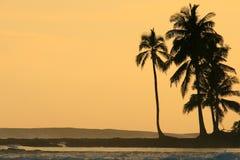 kokosowej palmy sylwetkowi zmierzchu drzewa Obrazy Stock