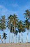 kokosowi drzewa Zdjęcia Royalty Free