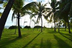 Kokosowi drzewa Zdjęcie Royalty Free