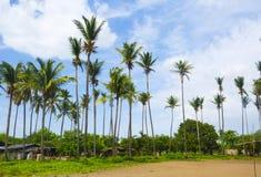 Kokosowi drzewa Zdjęcie Stock