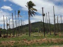 Kokosowi drzewa Obrazy Royalty Free
