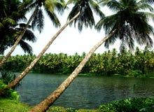 kokosowi drzewa Obrazy Stock