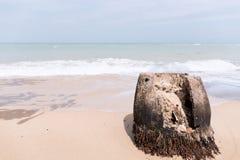 Kokosowi drzewa cięli długo temu plaża na, fala dalej Zdjęcia Stock