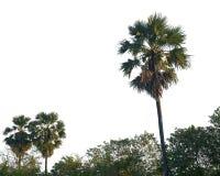 Kokosowi drzewa na białym tle Obrazy Royalty Free