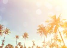 Kokosowi drzewa nad jasnym niebem na dniu z słońca światła retro skutkiem fotografia stock