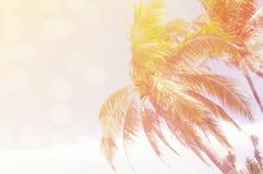 Kokosowi drzewa nad jasnym niebem na dniu z słońca światła retro skutkiem obraz stock