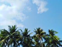 Kokosowi drzewa, niebo widok, piękne chmury zdjęcie royalty free