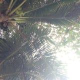 Kokosowi drzewa plażowy Azja Tajlandia Fotografia Stock