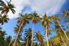 Kokosowi drzewa przy Nom wyspą, Nam Du Wyspa, Kien Giang prowincja, Wietnam Obrazy Stock