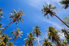 Kokosowi drzewa przy Nom wyspą, Nam Du Wyspa, Kien Giang prowincja, Wietnam Obraz Stock