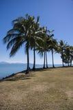 Kokosowi drzewa przy Portowym Douglas Fotografia Royalty Free