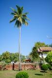 Kokosowi drzewa są wysocy, dominanta zdjęcia royalty free
