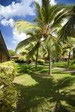 Kokosowi drzewa w kurorcie Obrazy Royalty Free