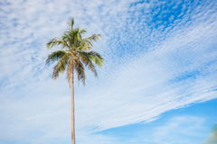 Kokosowi drzewa w nieba błękicie chmurnieją pięknego Zdjęcie Royalty Free