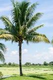 Kokosowi drzewa w parku Zdjęcie Stock