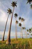 Kokosowi drzewa Wskazuje do nieba Zdjęcie Royalty Free