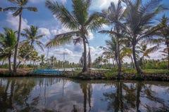 Kokosowi drzewa zbli?aj? stoj?ca woda kana?y w Munroe wyspie zdjęcia royalty free