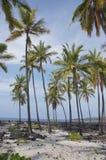 Kokosowi drzewka palmowe Zdjęcie Royalty Free