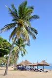 Kokosowi drzewka palmowe Zdjęcie Stock