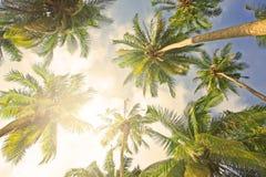 Kokosowi drzewka palmowe Fotografia Royalty Free