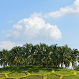 Kokosowi drzewka palmowe Obrazy Royalty Free