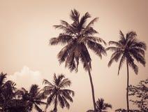 Kokosowi drzewka palmowe fotografia stock