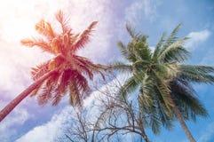 Kokosowi drzewka palmowe Zdjęcia Royalty Free