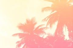 Kokosowi drzewka palmowe, abstrakt filtrowali tło Fotografia Stock
