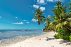 Kokosowi drzewka palmowe na białej piaskowatej plaży obrazy royalty free