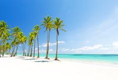 Kokosowi drzewka palmowe na białej piaskowatej plaży w Punta Cana, Dominikański obrazy stock