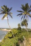 Kokosowi drzewka palmowe Natal Brazylia wyrzucać na brzeg - delfin zatoczka - zdjęcia stock