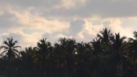 Kokosowi drzewka palmowe od laguny przeciw bly tropikalnemu niebu z chmurami zbiory