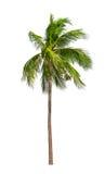 Kokosowi drzewka palmowe odizolowywający Obrazy Royalty Free