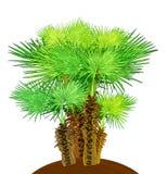 Kokosowi drzewka palmowe odizolowywający na bielu Obrazy Royalty Free