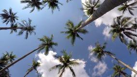 Kokosowi drzewka palmowe przeciw Błękitnemu Tropikalnemu niebu Czas zbiory