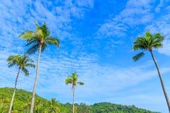 Kokosowi drzewka palmowe przeciw niebieskiego nieba tłu Zdjęcie Stock