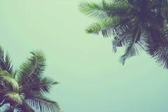 Kokosowi drzewka palmowe przy tropikalnym plażowym rocznika filtrem obraz royalty free