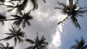 Kokosowi drzewka palmowe w niebieskim niebie z Ponurymi chmurami zbiory