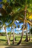 Kokosowi drzewka palmowe w republice dominikańskiej Obraz Stock