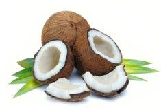kokosowi liść Obraz Royalty Free